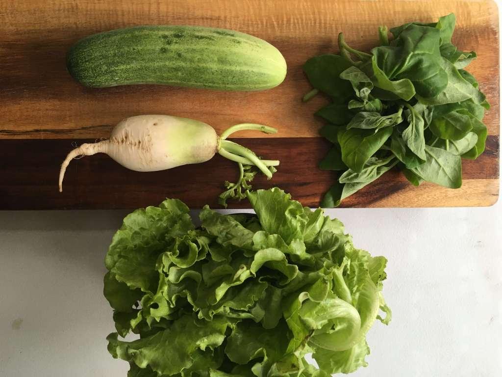 New Zealand Lettuce Salad Recipe with Korean Radish